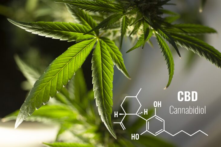 cbd packaging-feature image